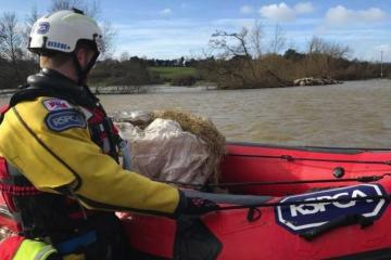 Flock of sheep washed away in Llandeilo floods with only one found alive