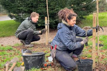 Cherry trees planted in Aberglasney Gardens to celebrate Wales and Japan friendship