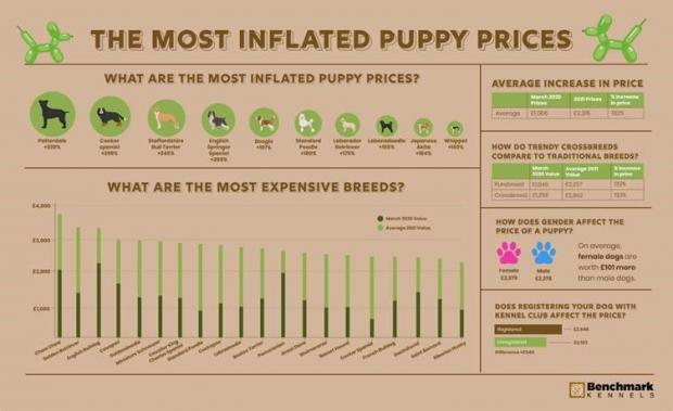 South Wales Guardian: The most inflated puppy prices. (Benchmark Kennels)