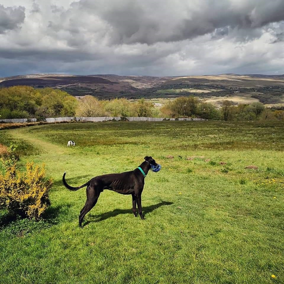 Plans approved for new dog rescue centre in Garnant