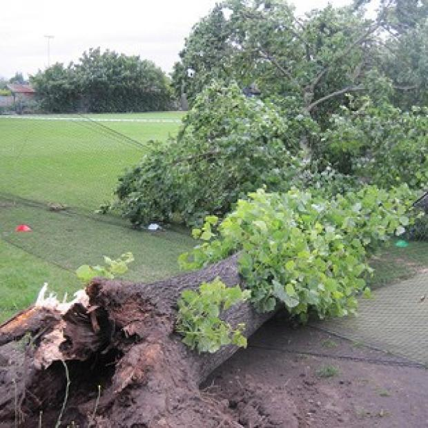 The scene at Spencer Cricket Club in Earlsfield, south west London where two boys were left with serious head injuries when the tree fell on them