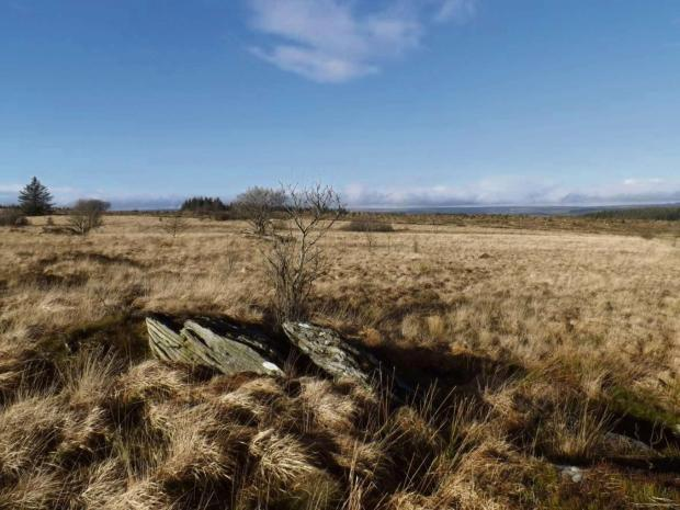NATIONAL IMPORTANCE: Carmarthenshire's boglands have been identified as a priority area of rare raised habitat.