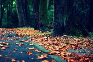 Build-up of fallen leaves on roadside causes concern