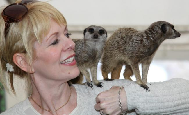 You can catch the meerkats at the National Botanic Garden of Wales on August 1 and 2